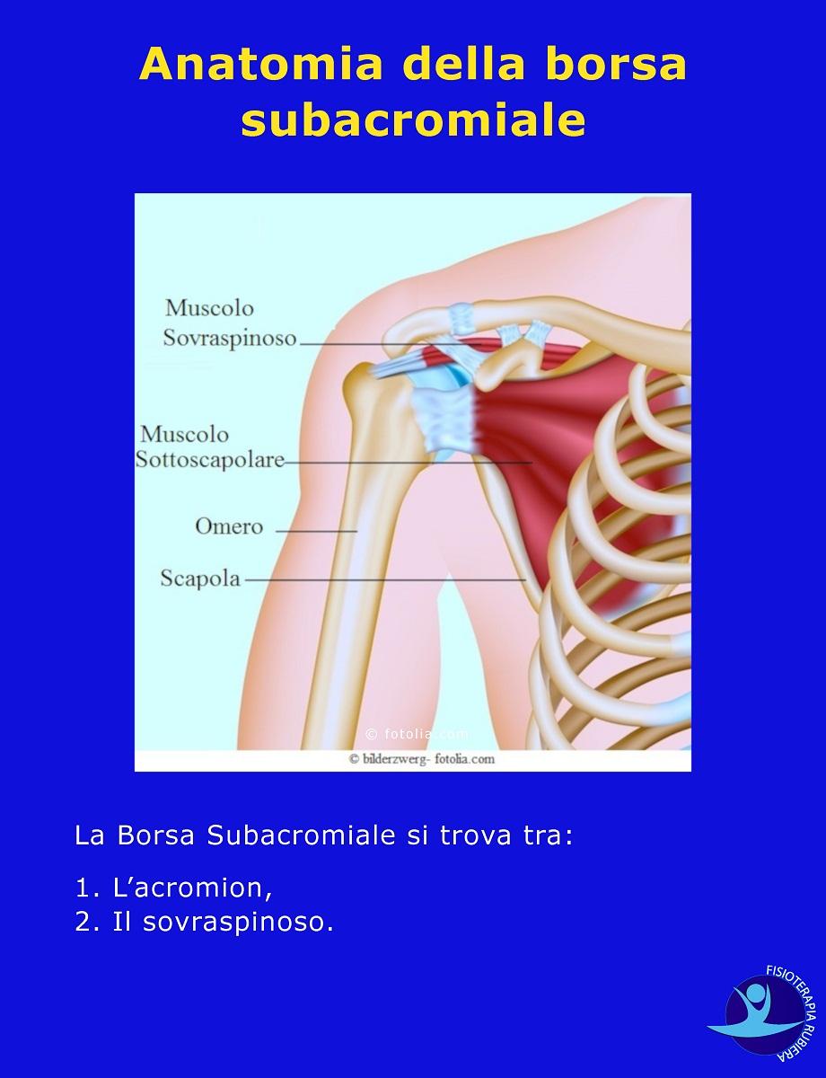 Anatomia della borsa subacromiale