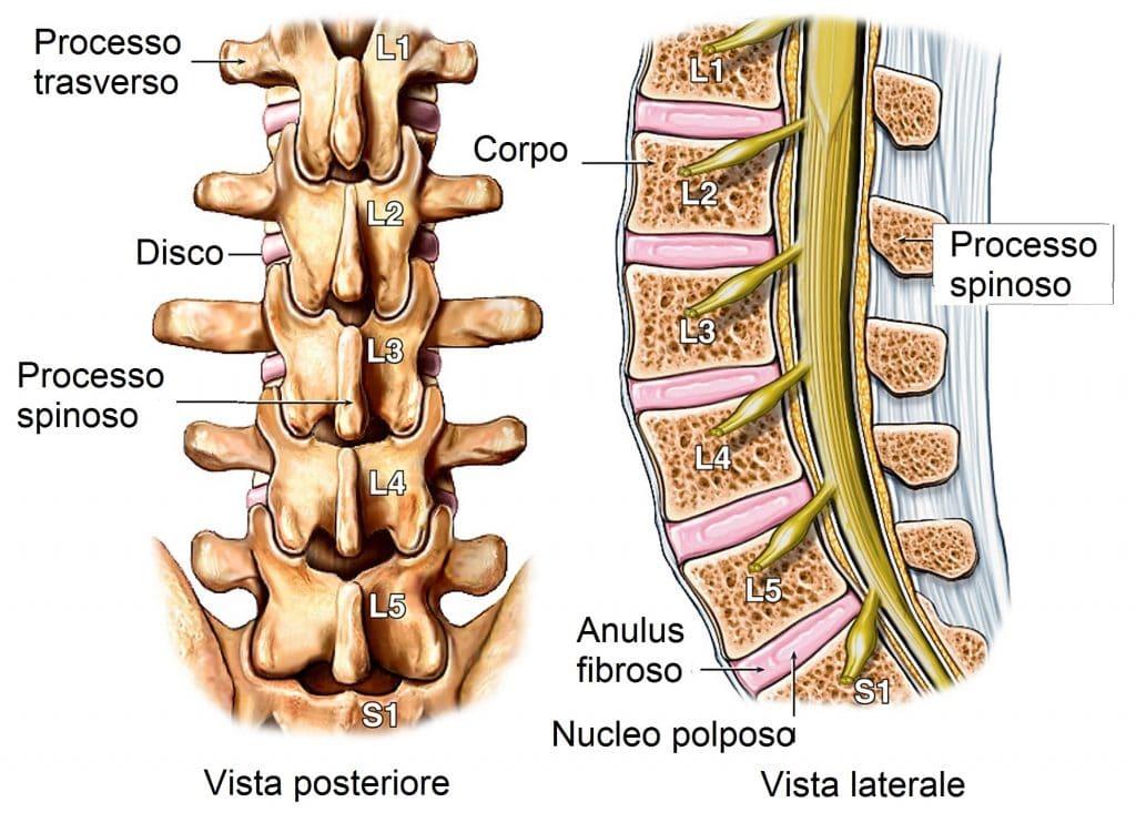 Colonna vertebrale lombare,disco,vertebre
