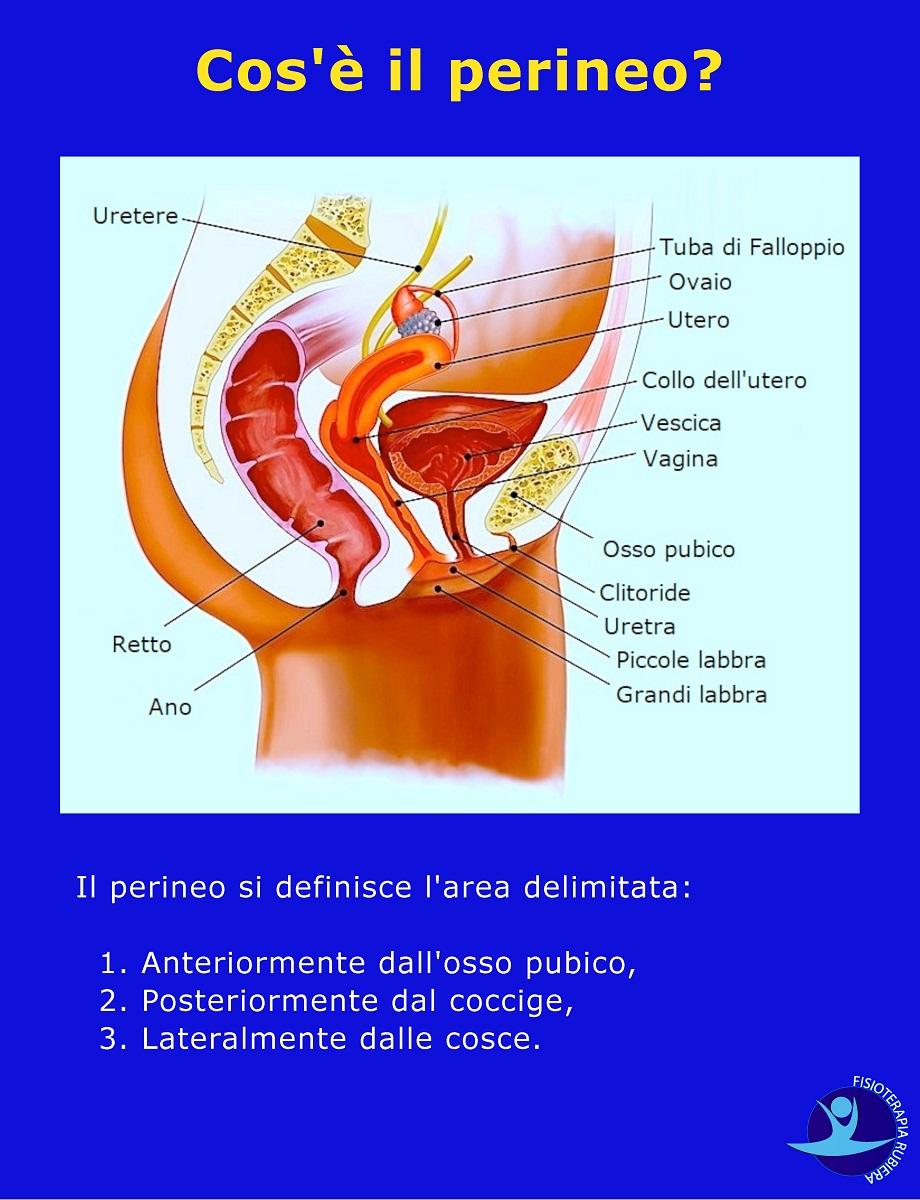 Cos-è-il-perineo