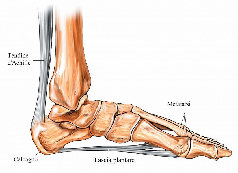 Tallone,calcagno,sperone,fascia