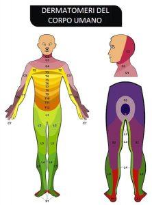 dermatomeri,localizzazione,sintomi,dolore,formicolio,l2,l3,l4,l5,s1,ernia, protrusione