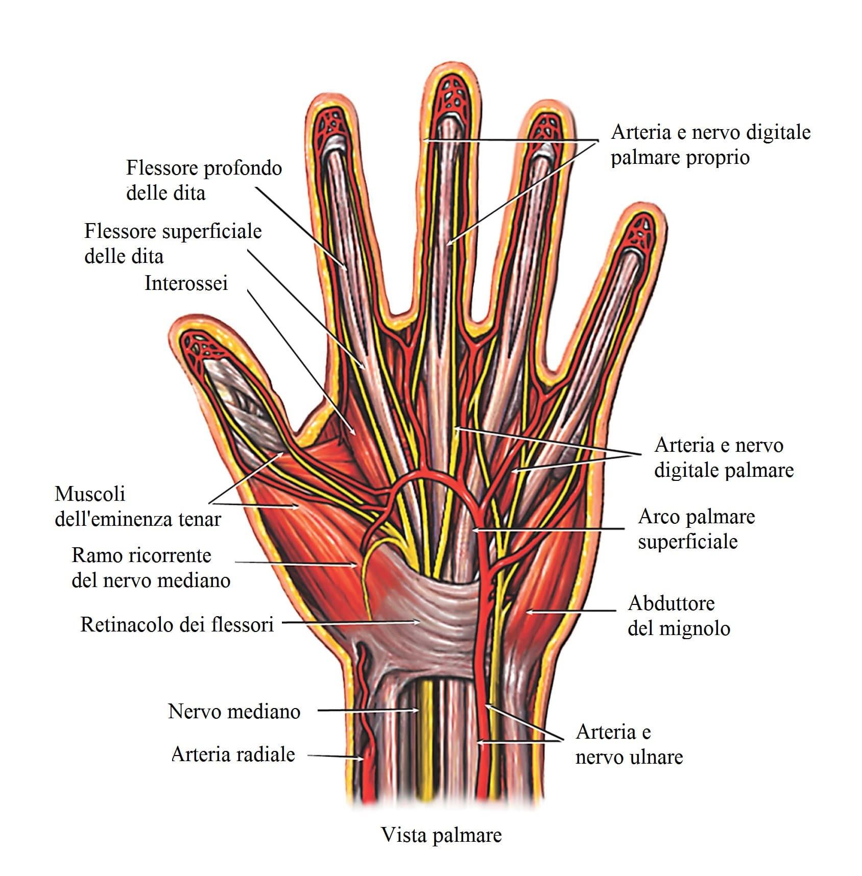 tendinite ai flessori della mano e polso a sinistra o