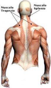 anatomia, posteriore, dorso, lombare, trapzeio, scapola, connettivo, toraco lombare, manipolazione, massaggio, infiammazione, tendinite, contrattura, dolore, male, fisioterapia e riabilitazione