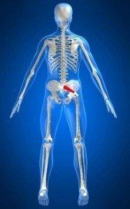 anatomia muscolo piriforme, rotatori, anca, sacro, bacino, origine, inserzione, trocantere, piegamento, flessione, medio gluteo, allungamento, contrazione, valutazione, tendine, anca, glutei