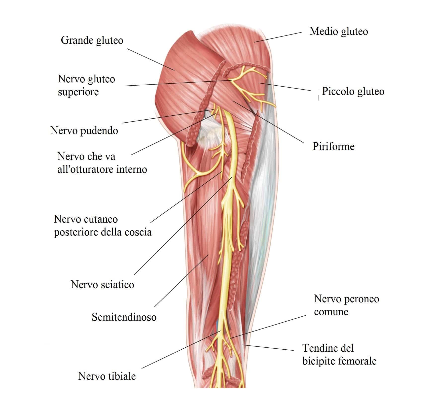 Contrattura muscolare a schien polpaccio o coscia for Interno coscia non dimagrisce
