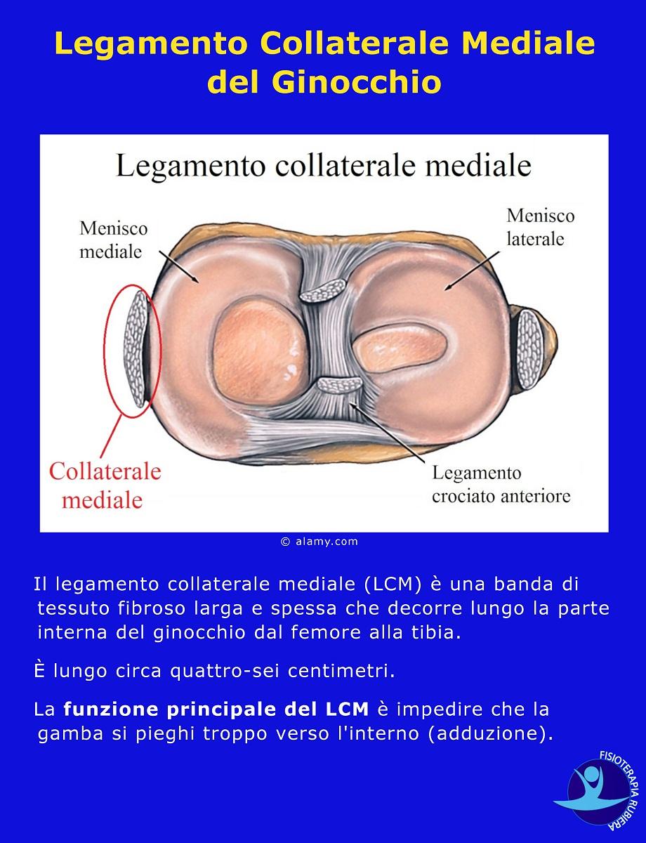 Legamento-Collaterale-Mediale-del-Ginocchio