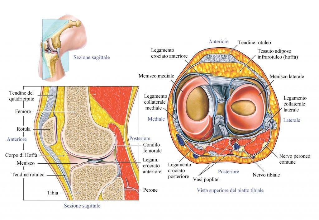 Legamento crociato,menisco interno,esterno