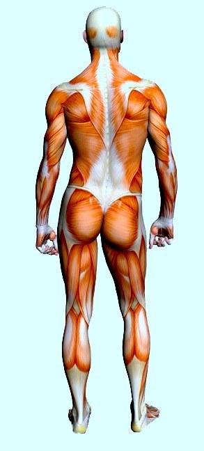 Inchiodato un nervo un trattamento posteriore