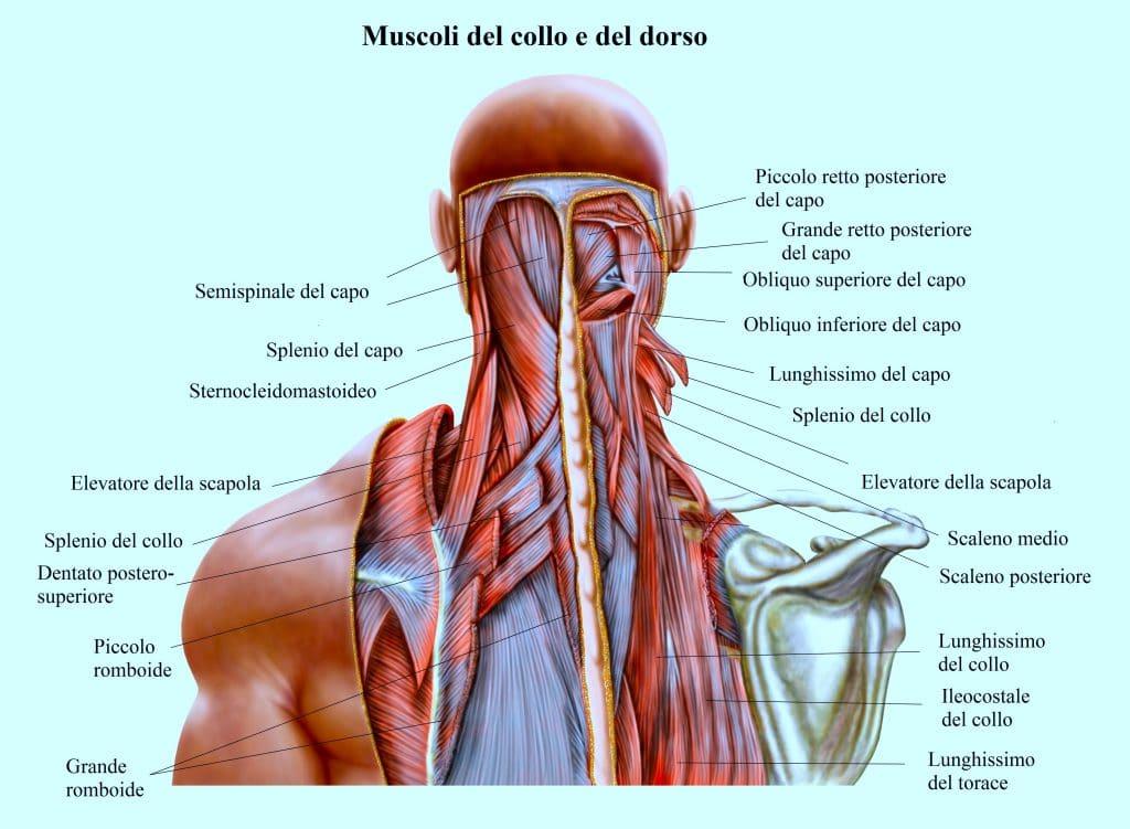Muscoli del collo,cervicale,mal di testa