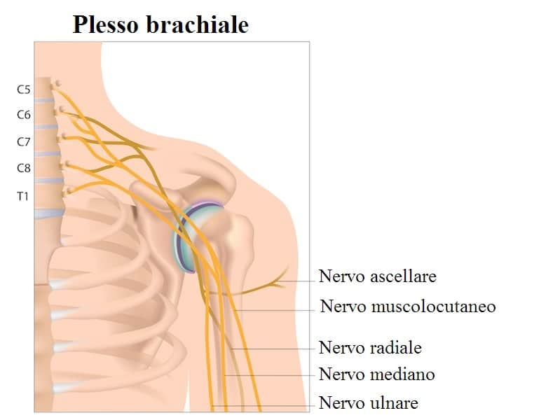 Plesso brachiale,nervo radiale,mediano,ulnare