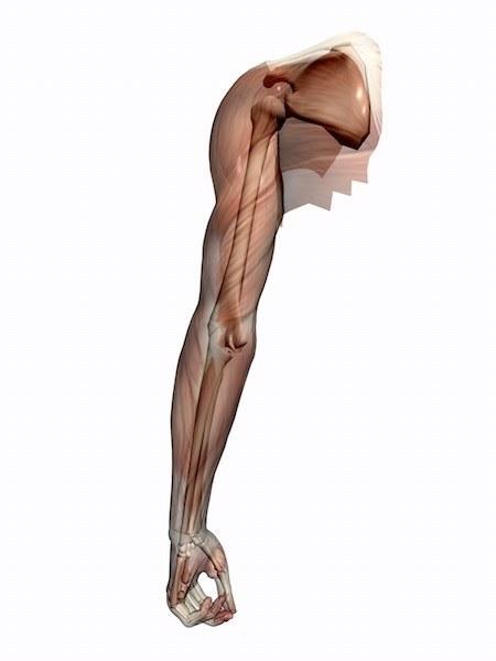 scapola,snistra,spalla,dolore,infiammazione,postura