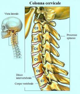 colonna vertebrale cervicale,collo