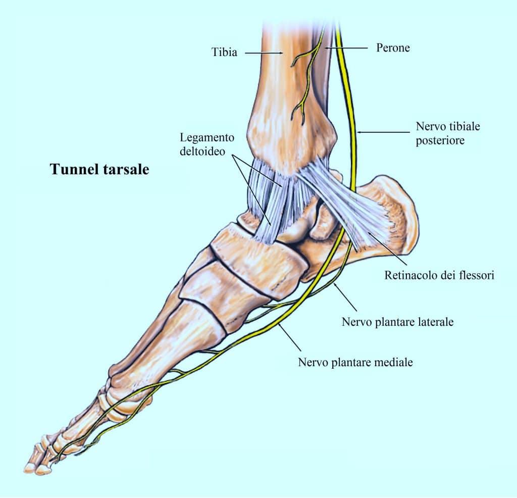 tunnel tarsale,nervo tibiale