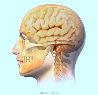 cervello,mandibola,mascella,occhio