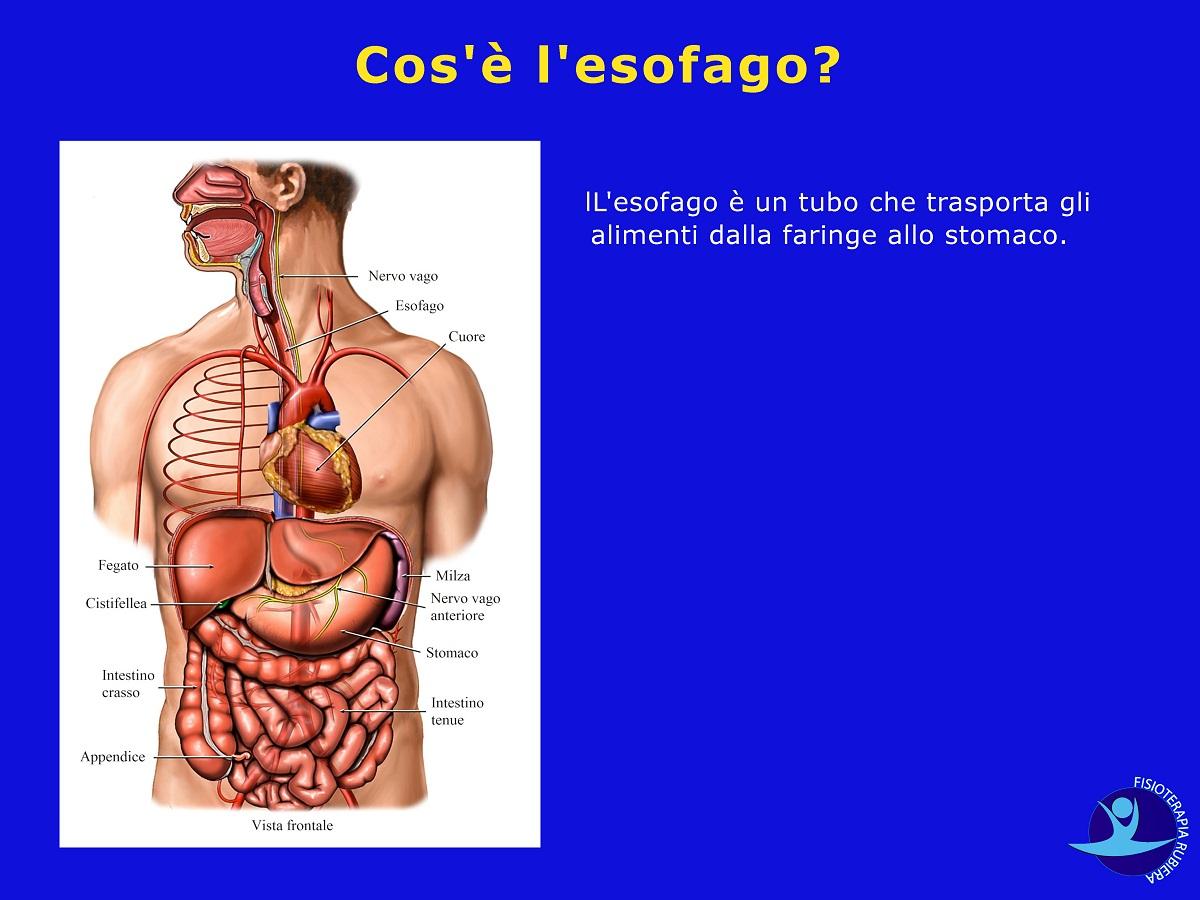 Cos'è l'esofago