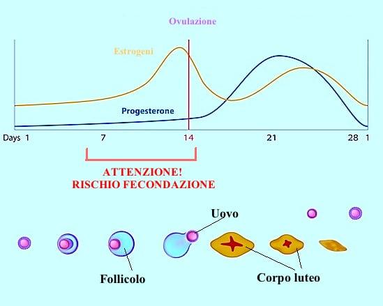 Calcolo dei giorni dell'ovulazione