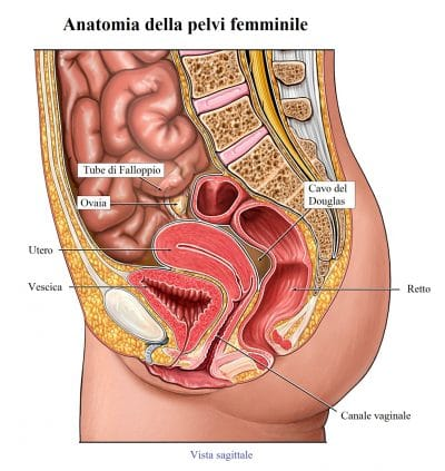 ovaio,utero,anatomia,osso sacro,vescica