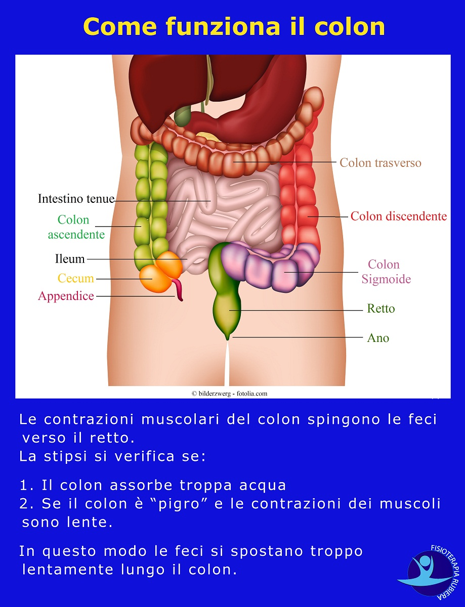 come-funziona-colon
