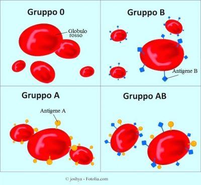 gruppo-sanguigno-0-a-b-ab