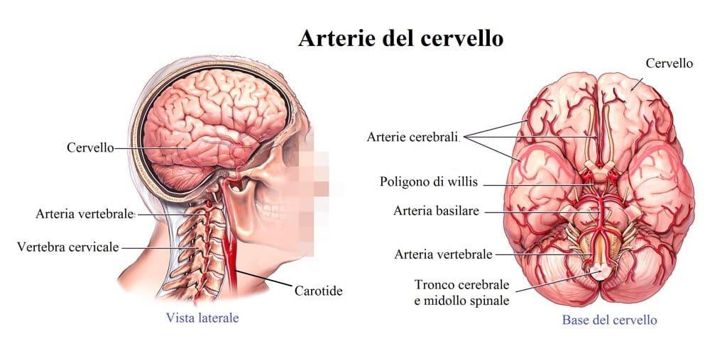 arterie del collo,cervello,poligono di willis