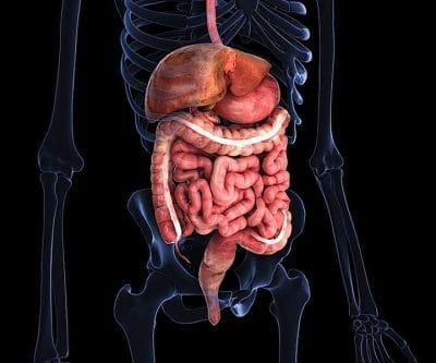 intestino, giardia