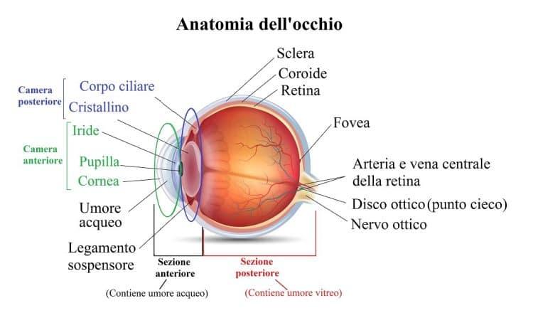 pressione alta,occhi,camera anteriore,occhio,umore acqueo