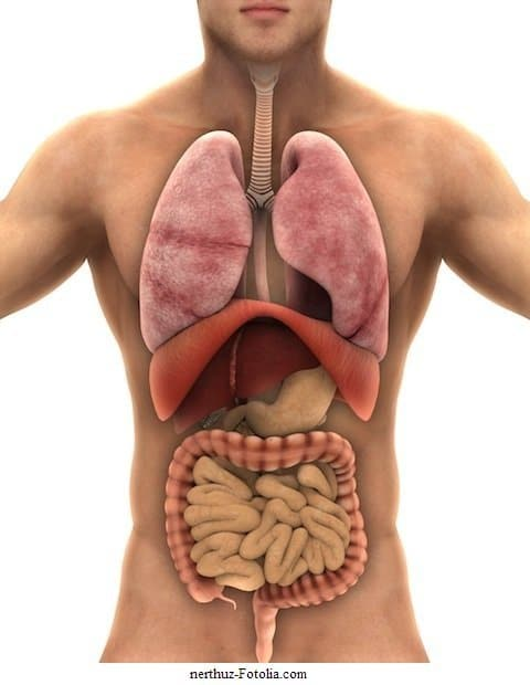 gonfiore e mal di stomaco