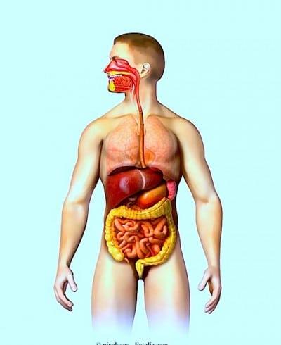 Candida intestinale - sintomi e cura