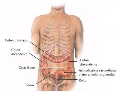 colon ascendente,trasverso,discendente,sigmoideo