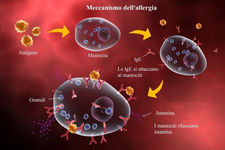 Reazione allergica,allergia,meccanismo,infiammazione,ige
