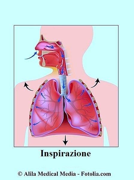 Inpirazione,polmoni,dispnea