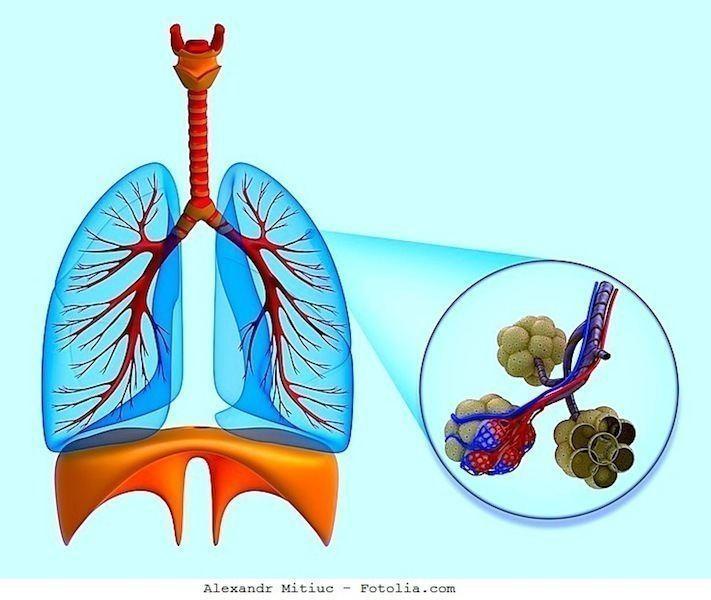 Polmone,diaframma,alevoli,respiro