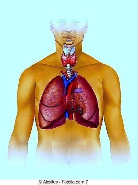 polmone