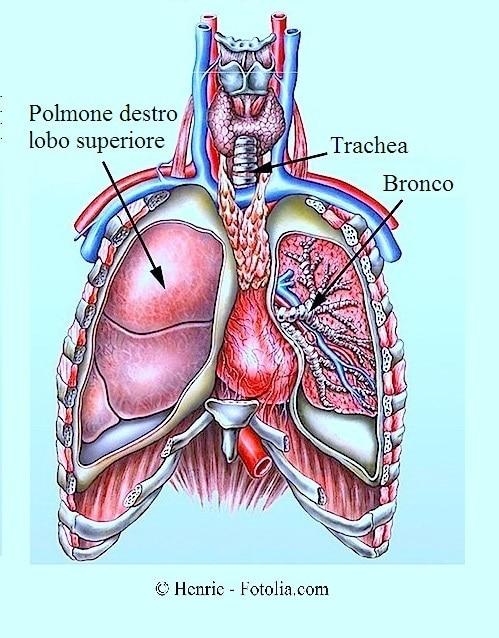 Dolore al petto sul lato destro alto durante il respiro for Dolore schiena lato destro alto