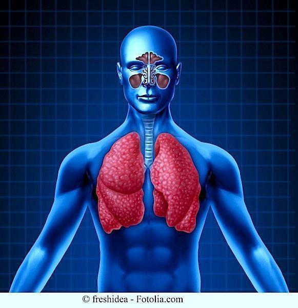 Anatomia,polmonare,sinusite