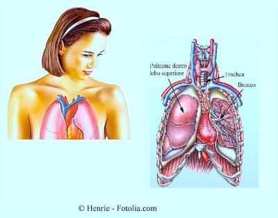 Anatomia polmoni,bronchi,trachea