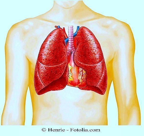 Polmone,apnea