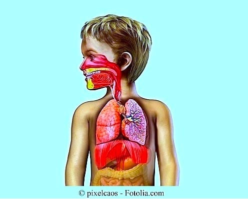Anatomia,bambino,polmoni,gola,naso