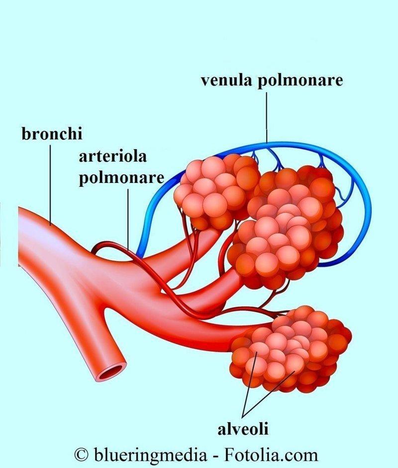 Alveoli,ostruzione,polmone