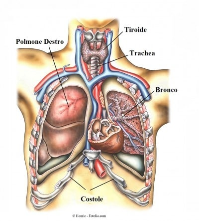 Ipertensione arteriosa polmonare