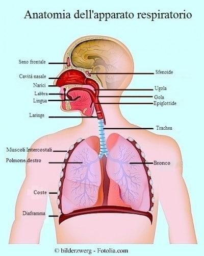 Naso chiuso o congestione nasale