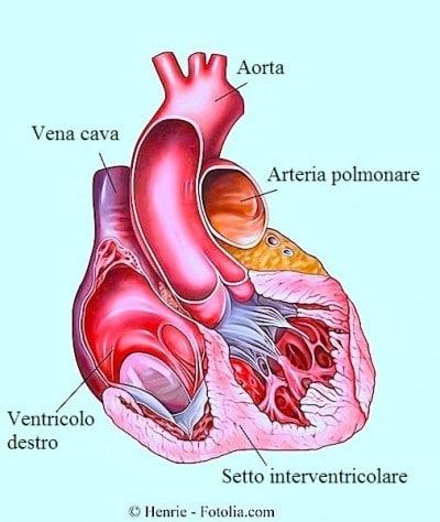 Battito cardiaco normale