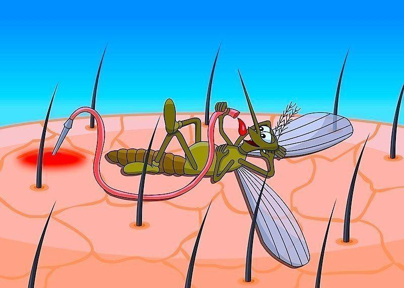 Puntura di insetti