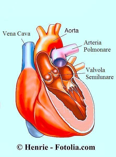 cuore,arresto cardiaco