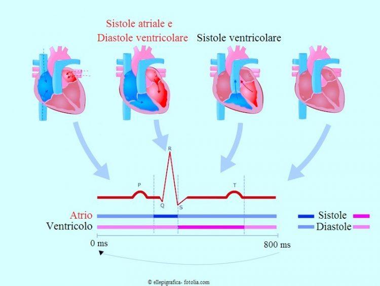 Contrazione cardiaca,cuore,diastole,sistole