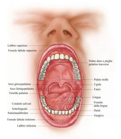 dolore ai denti,lingua,frenulo,palato