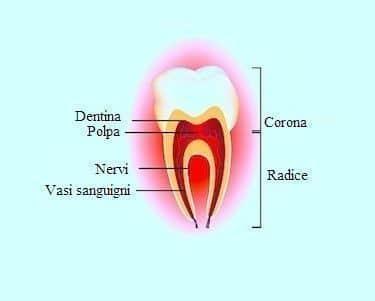 Denti,problemi,sintomi,anatomia,polpa