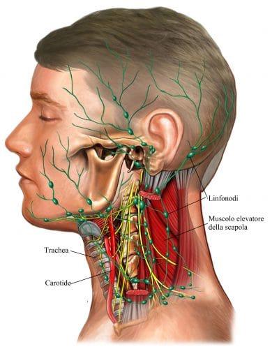Linfonodi ingrossati,collo,cervicale,mandibola