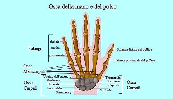 Dolore al polso,ossa,mano,dita