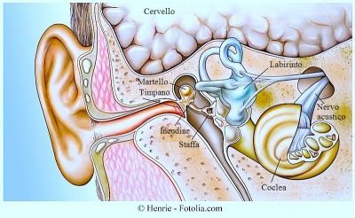 Orecchio,anatomia,staffa,incudine,martello,timpano,coclea